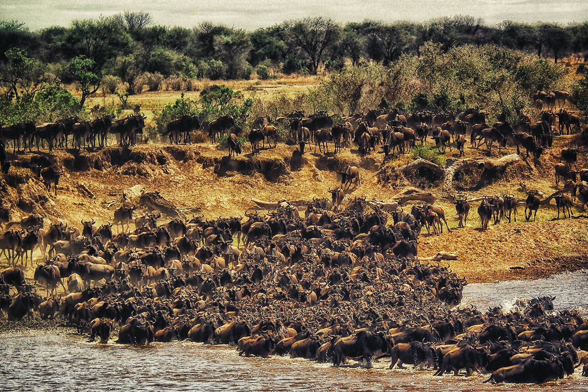 8 Days Serengeti Migration Safari